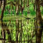 poza Vacanță  Kranevo : Vizitați Rezervația Naturală Baltata